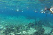 Bonito - Snorkeling - Rio do praita - Pasion Andina - Bresil
