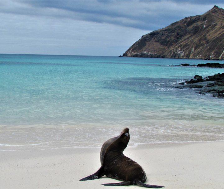 Wildlife - Sealion - Galapagos - Pasion Andina