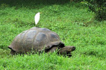 Wildlife - Galapagos - Tortugas - Pasion Andina - Ecuador - Nature