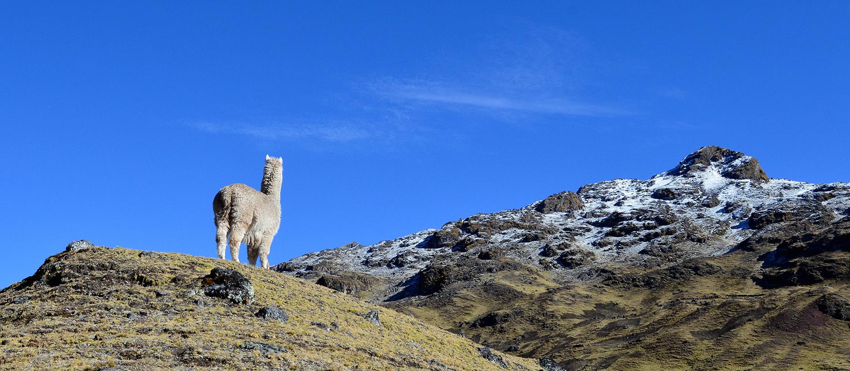 Trek de Lares jusqu'au Machu Picchu