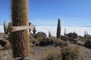 uyuni-pasionandina-travelageny-voyage-travel-bolivia-bolivie-saltflat-desert de sel-desert-nature-sel-beautiful-sky-cactus-île