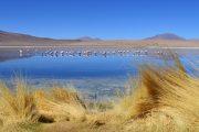 uyuni-lac-pasionandina-travelagency-montagne-mountain-bolivie-bolivia-trvael-voyage-flamant rose-oiseaux-bleu-miroir-nature-beautiful