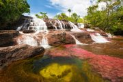 Caño cristales - Guadalupe - Pasion Andina - Colombia - Nature - Wildlife - Landscape