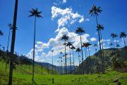 Valle de Cocora - Salento - Colombia - Pasion Andina - Nature - Palmiers de cire