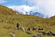 Trek Perolniyoc - Inti Punku - Andes - Trek - Ollantaytambo - Pasion Andina