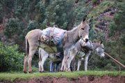 Perolniyoc - Pasion Andina - Cusco - Trek -Nature