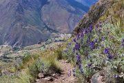 Perolniyoc - Inti Punku - Ollantaytambo - Trek - Pasion Andina - Cusco