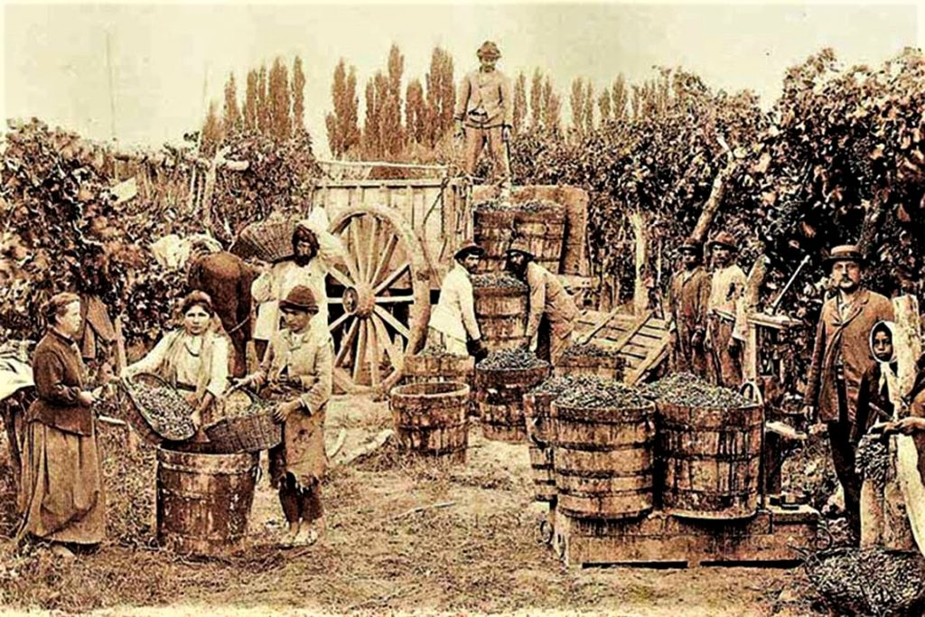 Uva y conquista peruana - Pasion Andina