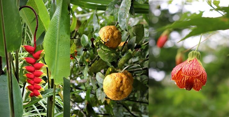 Plantes et Fruits du Palili - Casa de Campo