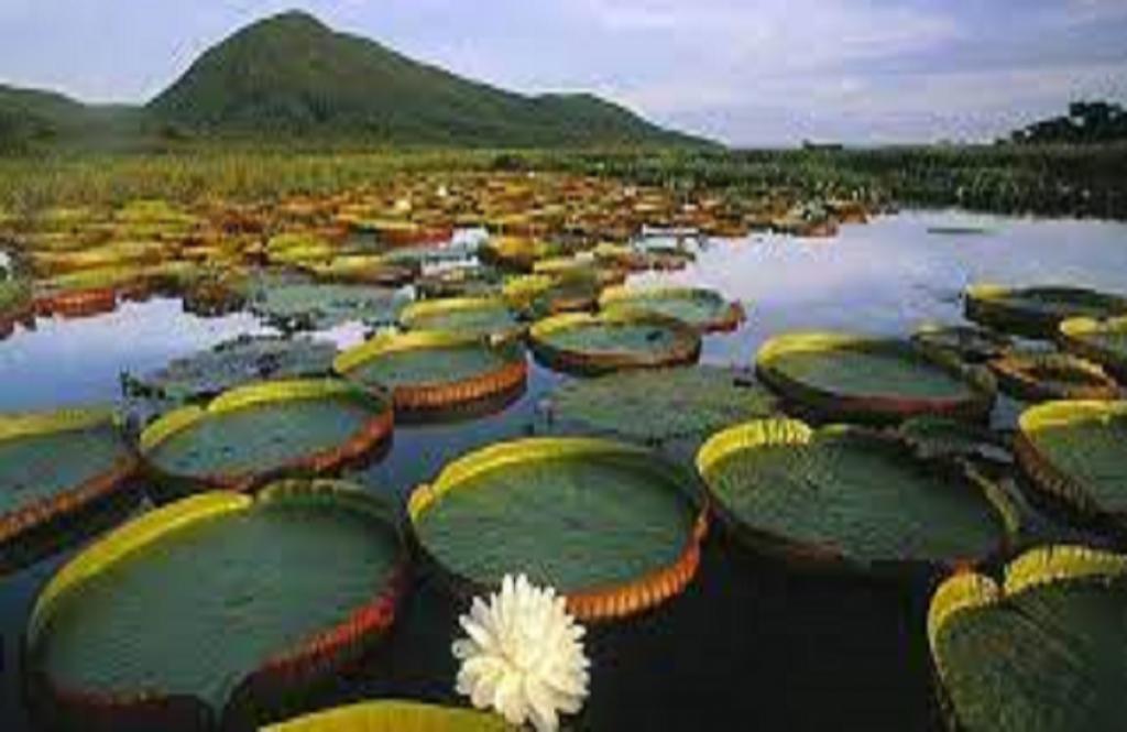 Pasión Andina - Brasil